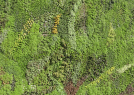 Mur végétalisé 2